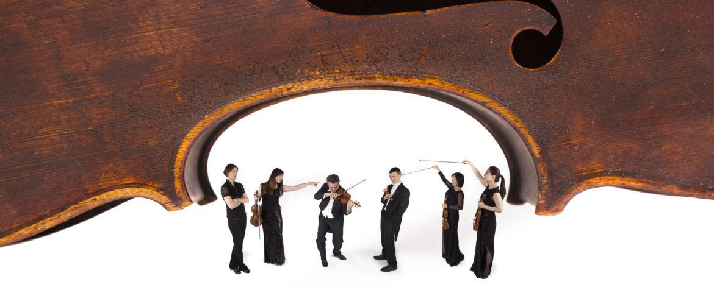 LL-Cello-2